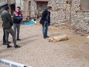 Sokak ortasında vurulan köpek otopsiye gönderildi