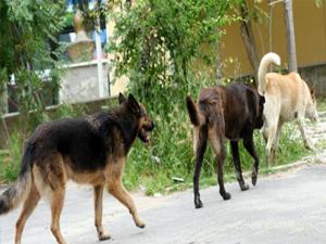 Dünyanın ilk köpek huzurevi açıldı