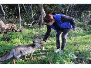 Milli Park'ta karşılaştığı tilkiyi eliyle besledi