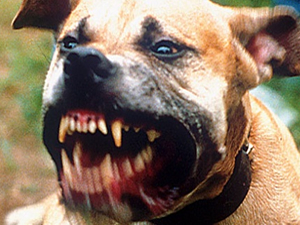 Eskişehir'de pitbull köpeği saldırdı iddiası