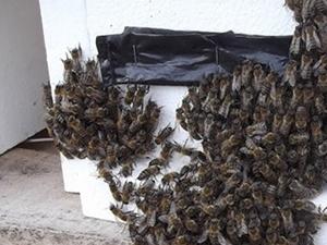 Arı sokması öldürdü