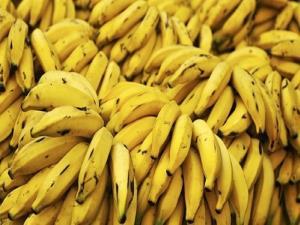 Genetiği değiştirilen muz vitamin kaynıyor