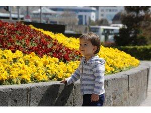 Büyükşehir, şehri çiçek bahçesine çevirdi