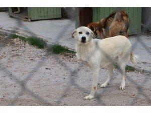 Çankaya Belediyesi sokak hayvanlarını güvenli ortamlarda yaşatıyor