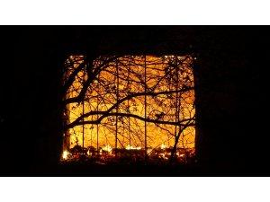Uşak'ta çıkan yangında 2 ev ve 1 ahır kül olurken çok sayıda koyun ve kuzu telef oldu