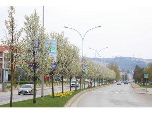 Çiçek açan ağaçlar görsel şölen sunuyor
