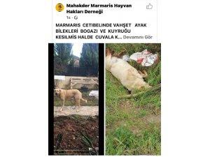Sokakta bakılan köpek vahşice katledildi