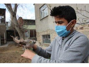 Yaralı atmacaya sahip çıktı, tedavi ettirip doğaya saldı