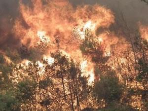 Yunanistan'da korkutan orman yangını