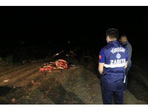 Adana'da boş arazide kesilmiş 3 at ele geçirildi