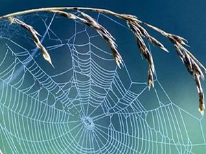 Örümcek ağı askeri zırh yapımında kullanılacak!