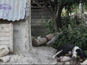 Eşi evi terk etti, 2 kişiyi ve 2 köpeği öldürerek kaçtı