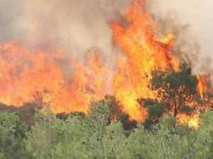 Foça'da orman yangını!
