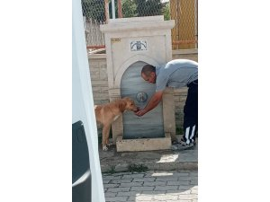 Park ve bahçeler görevlisi köpeğe eliyle su içirdi