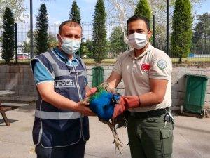 Tavus kuşu çalan hırsızlar yakalandı