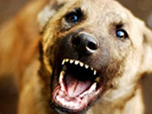 Köpekler çocuğu parçalayarak öldürdü!