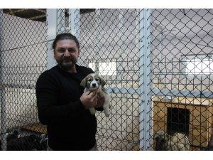 Artvin'de sokak köpeği tek seferde 14 yavru doğurdu