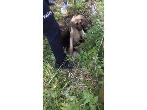 Su kuyusunda mahsur kalan köpekleri itfaiye ekipleri kurtardı