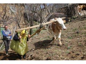 Türkücü Aydın Aydın arı kostümü giyerek hayvanlarla helalleşti