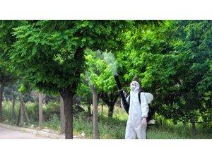 Kahramanmaraş'ta ağaçlar zararlılardan korunuyor