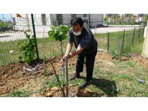 Tuzla'da sağlık çalışanlarına jest için sağlık ocağının bahçesini meyve bahçesine çevirdi