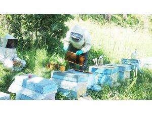 Balıkesir'de balın iyi para etmesi arılara olan itibarı artırdı