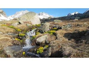 Macahel'de eriyen karlar kartpostallık görüntüler oluşturdu