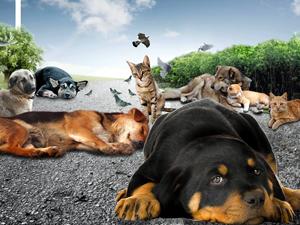 Sokak hayvanlarının ihtiyaçlarını belediye gideriyor
