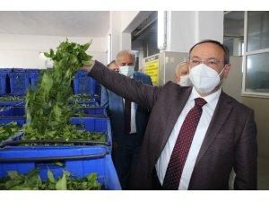 ÇAYKUR yaş çay alım kampanyasını törenle başlattı