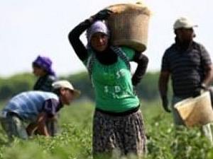 Mevsimlik işçi yevmiyeleri belirlendi