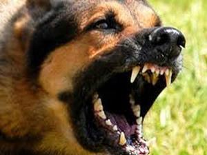 Saldırgan köpeği bıçaklayarak öldürdü!