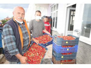 Konya'da üreticiler coğrafi tescilli çileğin alım fiyatının düşmesine tepkili