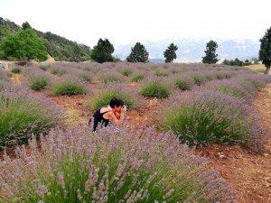 Çameli'nin lavanta bahçesi yaza hazırlanıyor