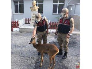 Amasya'da jandarmadan ayağı kırık karacaya şefkat eli
