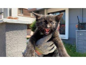 Yaramaz yavru kedi, itfaiye ekiplerini uğraştırdı