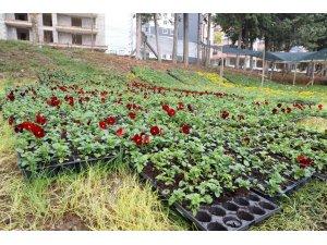 İlkadım'da mevsimlik 100 bin çiçek toprakla buluştu