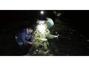 Van Gölü'nde 5 ton 450 kilogram inci kefali ele geçirildi