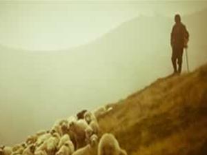 Çoban ölü bulundu