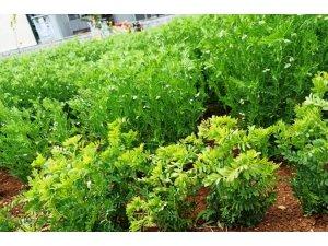 Harran Üniversitesi tarımda yeniliklerin öncüsü