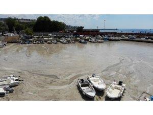 Bu görüntüler Tekirdağ'dan: Denizde salya çölü