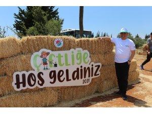 Kepez'de buğday hasatı sonrası boşalan topraklara meyve ve sebze ekiliyor