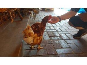 Esnafın maskotu 'tavuk' sokağa pislemesin diye maskeyle bezleniyor