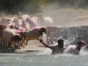 """""""Sudan koyun geçirme yarışması"""""""