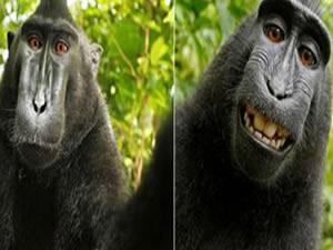 Maymun'un çektiği selfie ortalığı karıştırdı