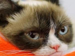 Bu kedinin 220 milyon lirası var!