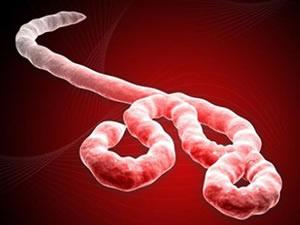 Ebola virüsünün tedavisi bulundu