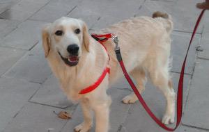 Belediye başkanı köpek seçildi