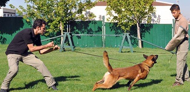 Köşk'ü üstün yetenekli köpekler koruyacak