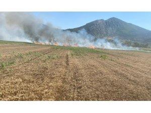 Elektrik direğinden çıkan kıvılcımlar 15 dönüm buğday tarlasını küle çevirdi