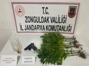 Jandarmadan uyuşturucu operasyonu: 15 kök kenevir bitkisi ele geçirildi
